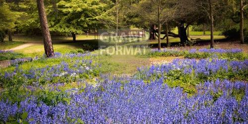 Forêt, fleurs bleues , photo à télécharger