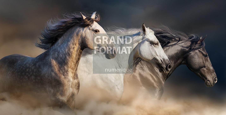 Cheval équitation photo impression et toile
