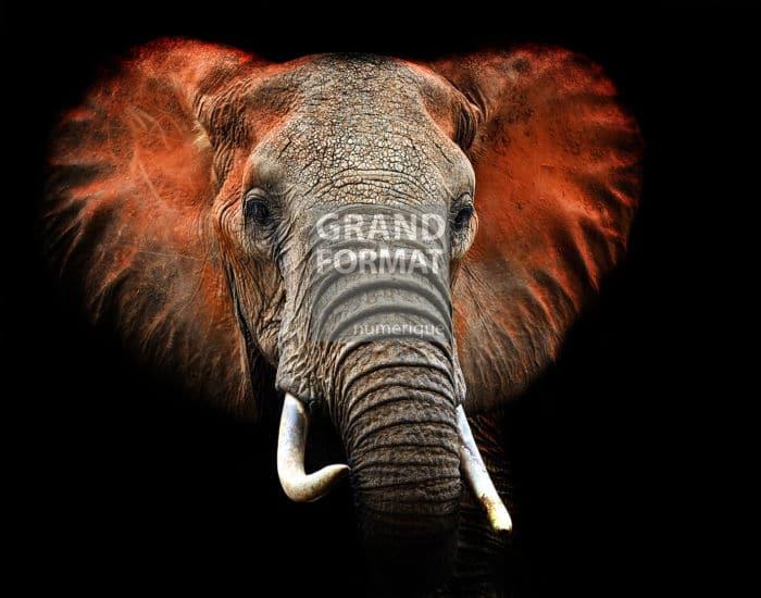 Eléphant Afrique photo impression et toile