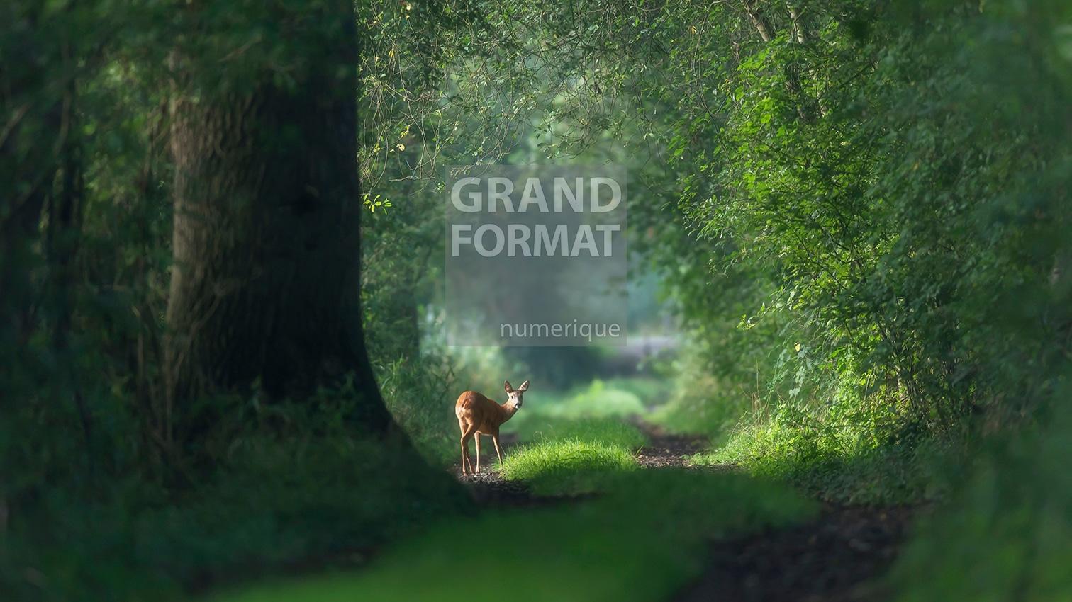 Forêt cerf photo impression et toile