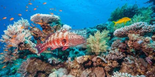 Fond marin, corail, photo à télécharger