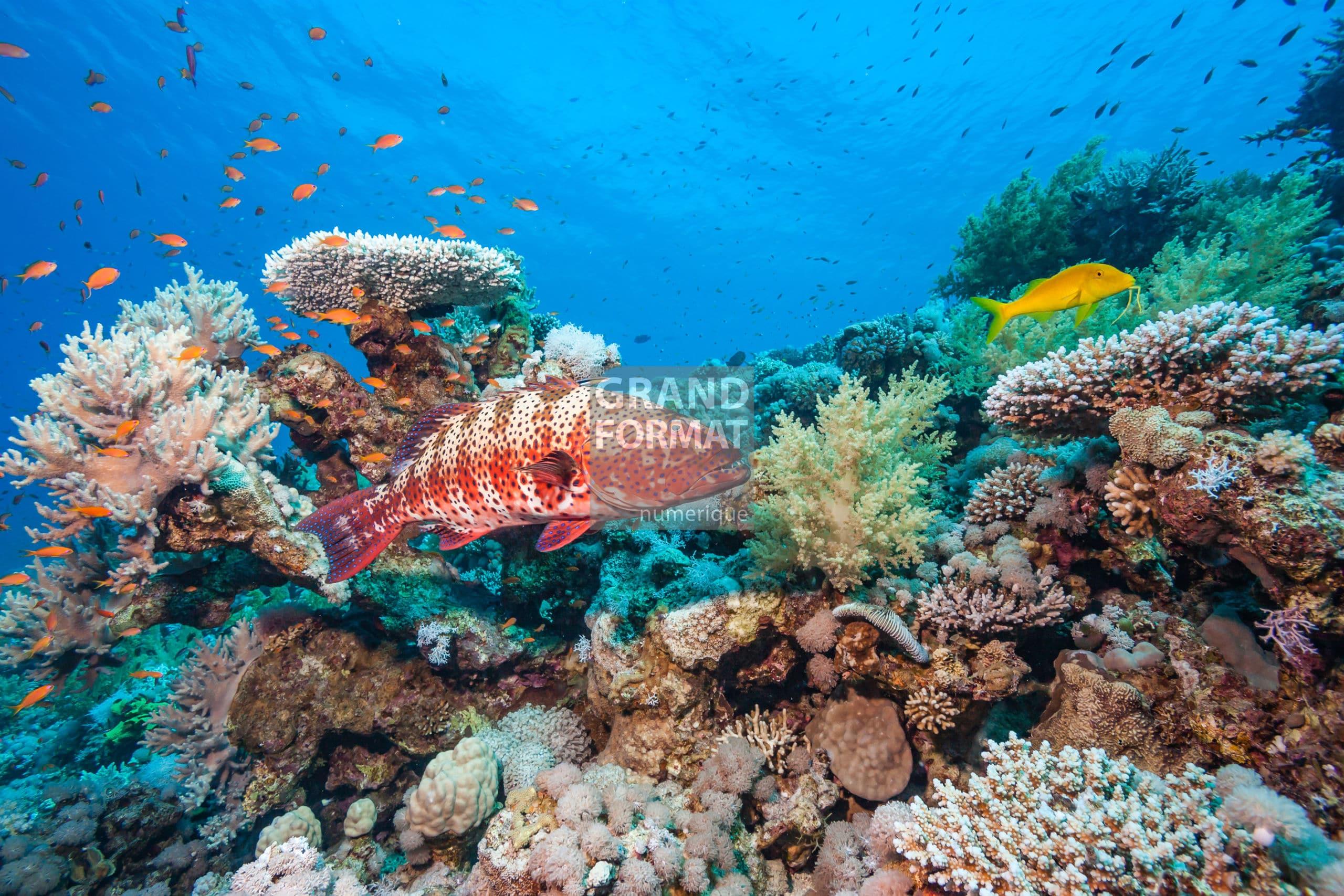 Océan corail photo impression et toile