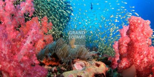 Fond marin, océan, photo à télécharger