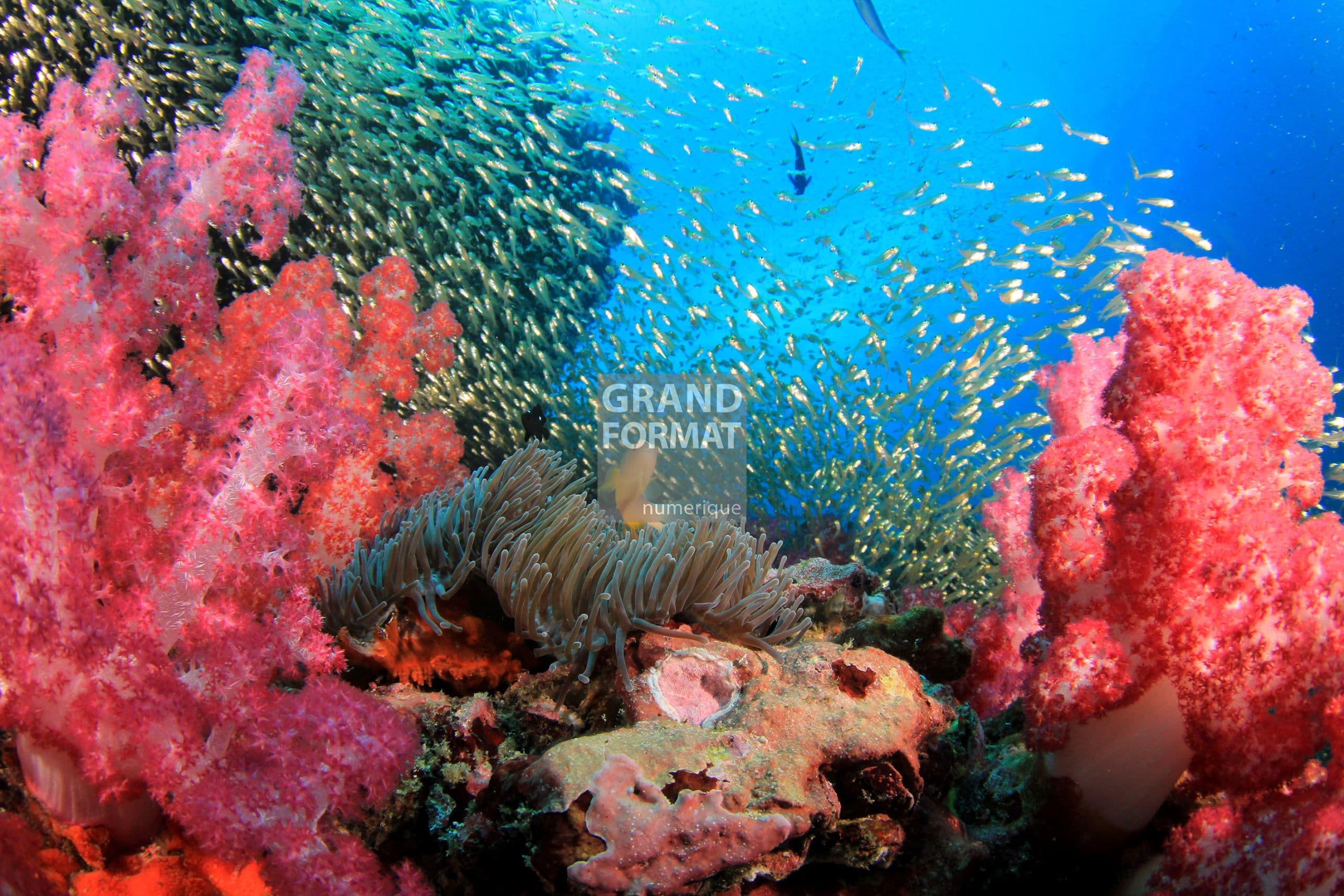 Mer océan photo impression et toile