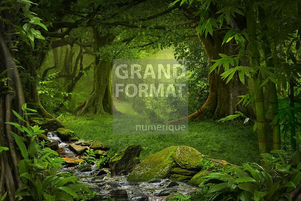 Forêt photo impression et toile