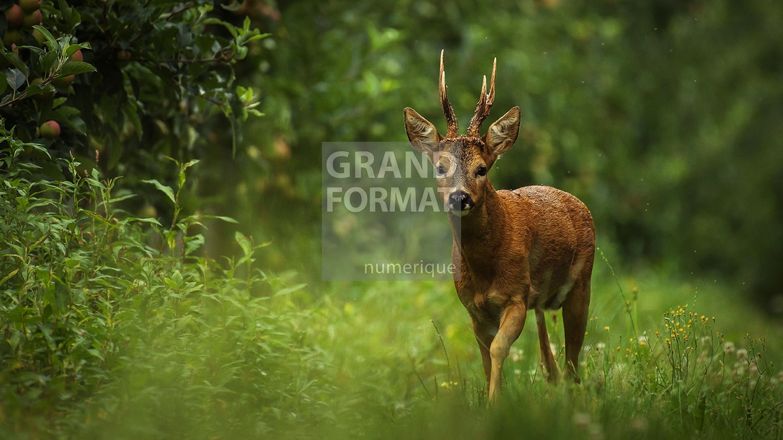 Animaux forêt photo impression et toile