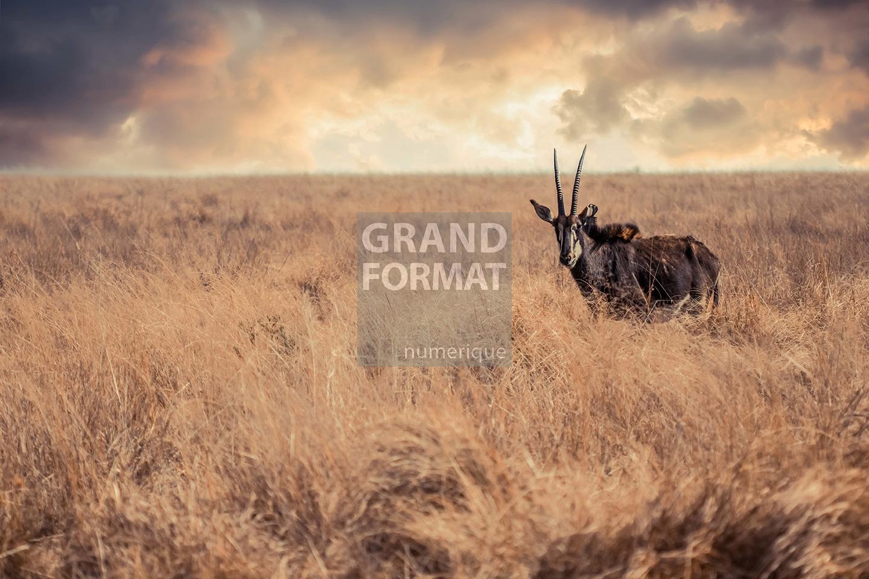 Savane Afrique photo impression et toile