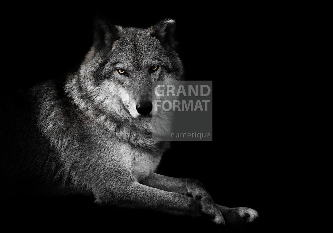 Loup animaux photo impression et toile