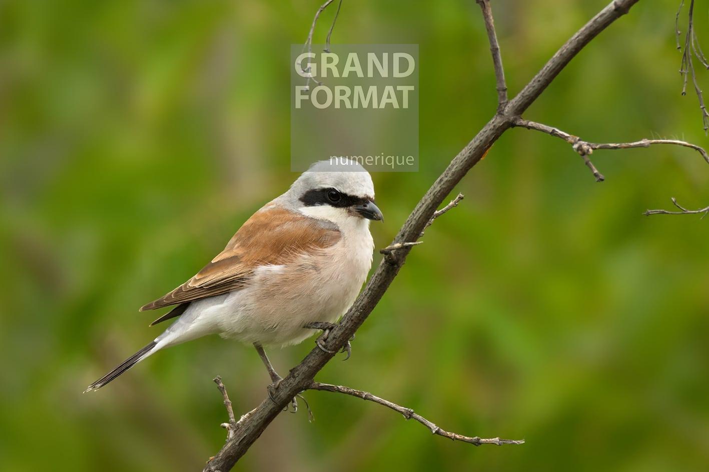 Oiseaux nature photo impression et toile