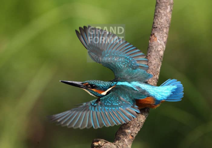 Oiseaux animaux photo impression et toile