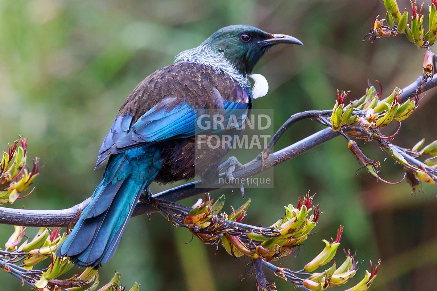 Oiseaux forêt photo impression et toile